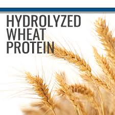 Wheat Protein Hydrolyzed